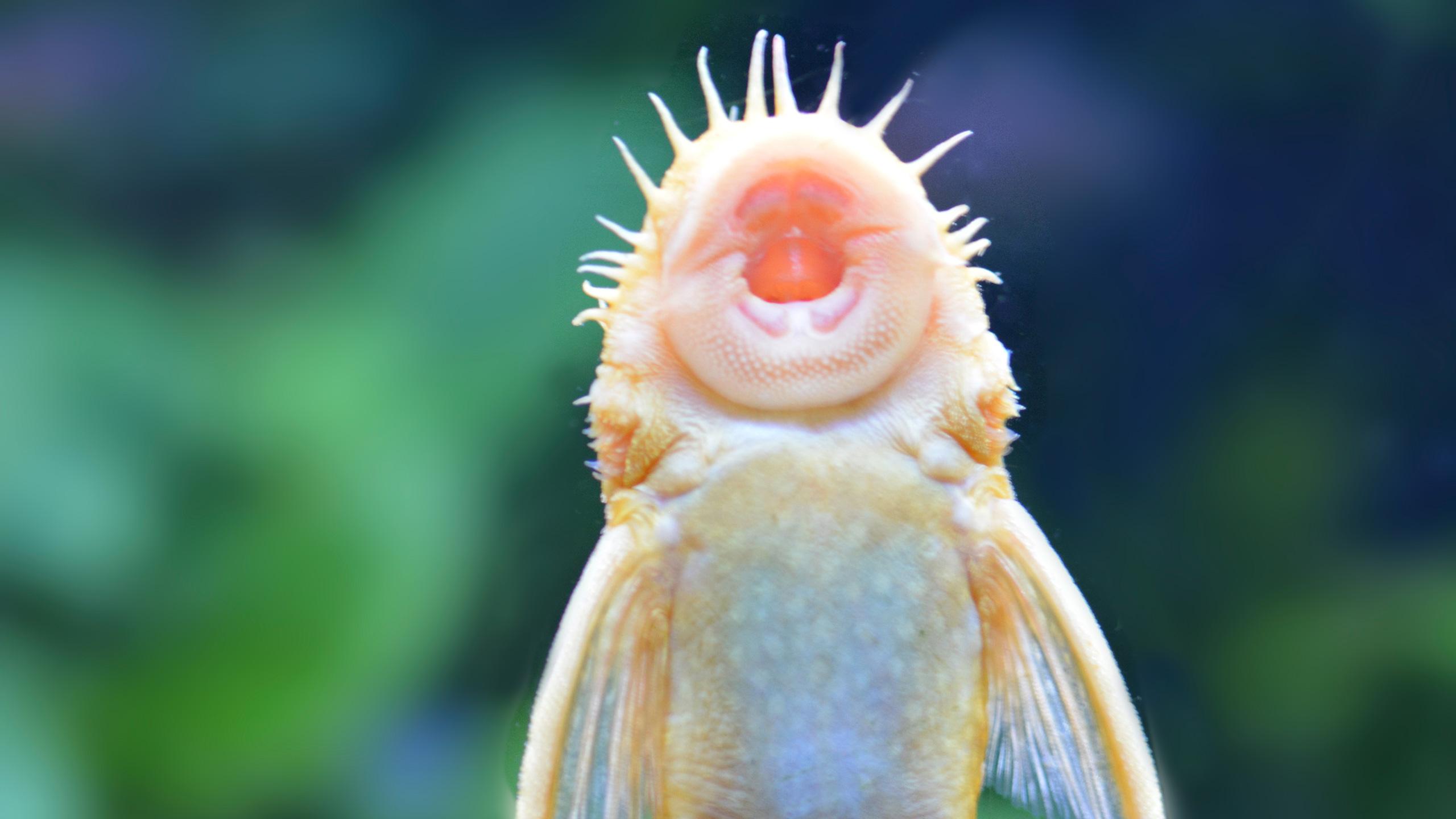 DSC_0630Putzfisch